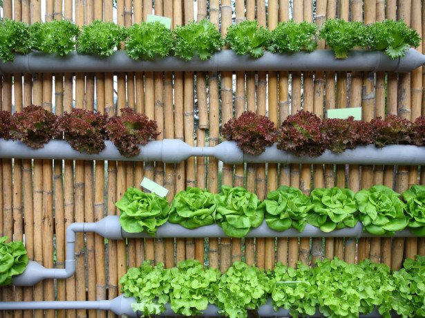 Вирощування салату на гідропоніці - як спосіб побудови бізнесу