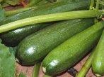 Вагою до 1000 г.кабачки білогор споживаються в будь — якому вигляді, придатні для зберігання; партенон-високоврожайний, середньоранній (від перших сходів до дозрівання плодів проходить 50 днів). Стійкий до хвороб, добре переносить і дощову, і жарку погоду. Плоди середніх розмірів, темно-зеленого кольору, з вираженим приємним смаком, вживаються в кулінарії і заготовках. Не зберігається. На відміну від самозапильних сортів, партенокарпіки не утворюють насіння, що робить мякоть цих кабачків особливо ніжною. Партенокарпічні кабачки
