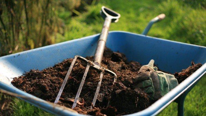 Савойська капуста-особливості вирощування та догляду за нею