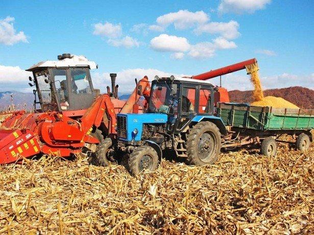 Чим відрізняється збирання кукурудзи на зерно від збирання на силос