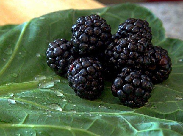 Ожина і її корисні властивості або справжнє джерело вітамінів у вашому саду