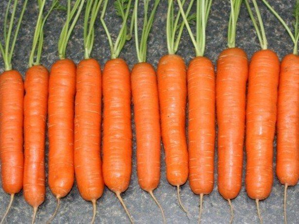 Фіолетова, біла і жовта морквина, а також найкращі сорти моркви