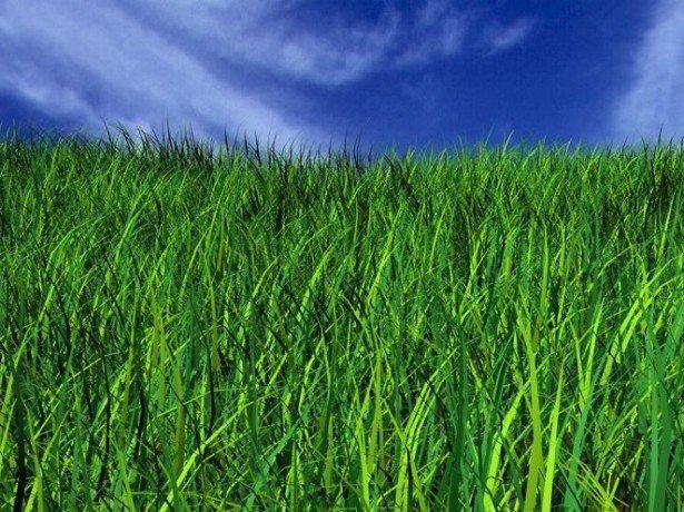 Гербіциди для боротьби з бурянами і добрива для підгодівлі газонної трави