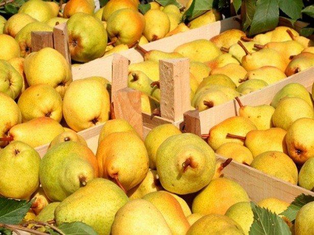 Як зберігати груші в домашніх умовах правильно