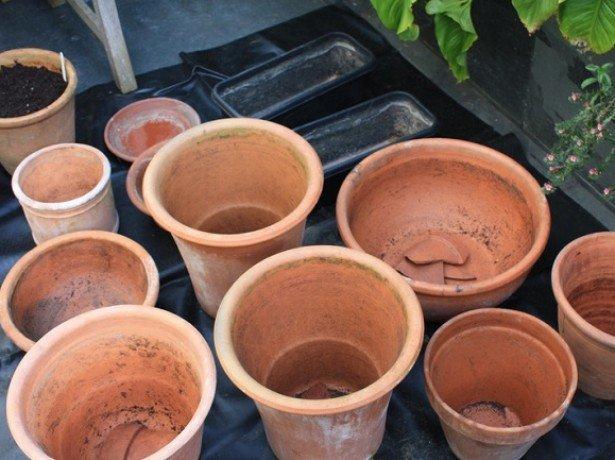 Весняна клумба на балконі – як посадити тюльпани в горщики