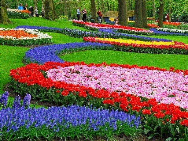 Як впорядкувати буйство квітів-грамотне планування клумби
