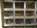 Клітини для кроликів своїми руками-прості і вдосконалені конструкції