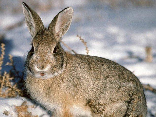 Домашні кролики-коротко про головне