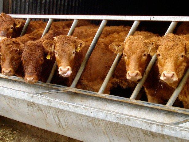 Поїлки для корів своїми руками