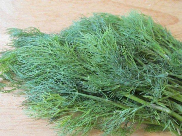 Кращі сорти кропу для вирощування на грядці, в теплиці або вдома