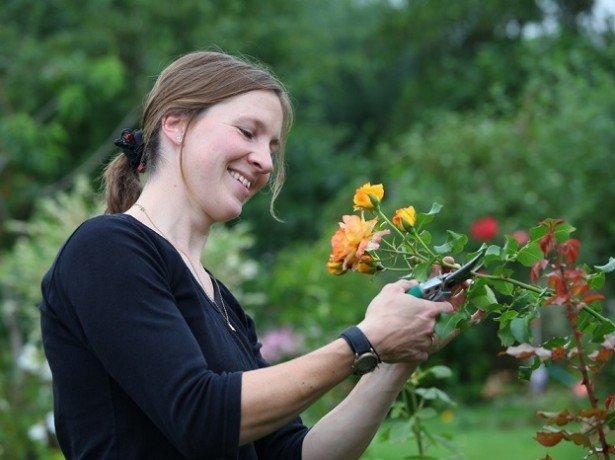 Обрізаємо троянди на зиму відповідно до специфіки куща