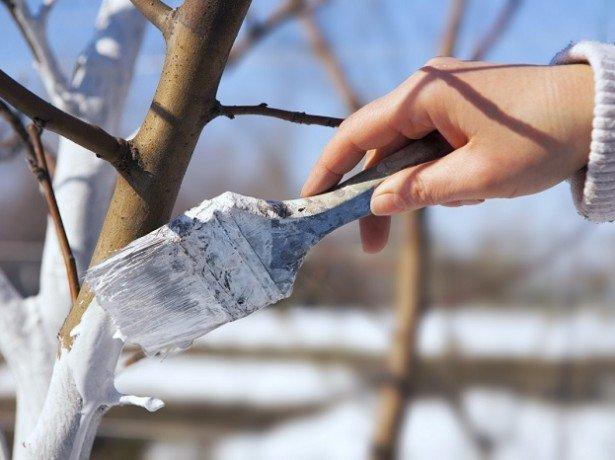 Осіння обробка яблунь-готуємо яблуневий сад до зими