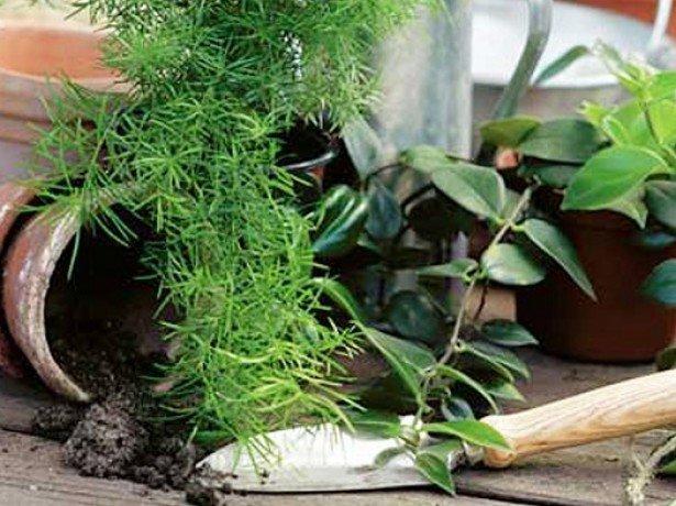 Від квіткових горщиків до стелажів - що може знадобитися при вирощуванні фіалок?
