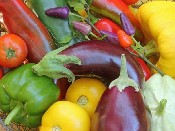 Картопля лапоть: все, що потрібно знати про вирощування сорту