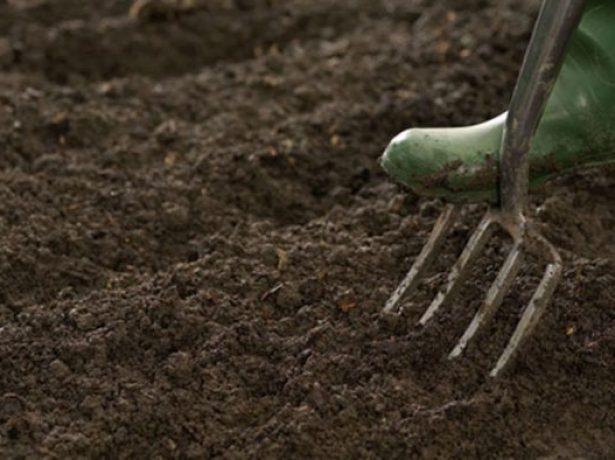 Що робити, якщо у перцю опадають завязі, квіти і листя