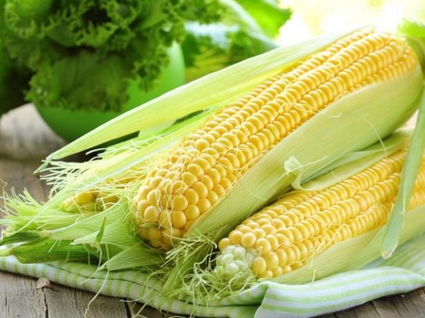 Корисна або шкідлива кукурудза, в чому її корисні властивості