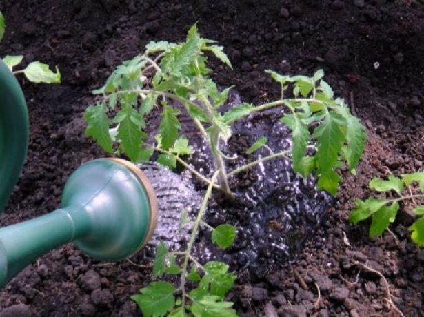 Підгортання картоплі: коли, навіщо і як правильно