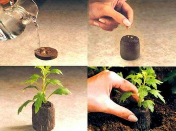 Як правильно користуватися торфяними таблетками для розсади