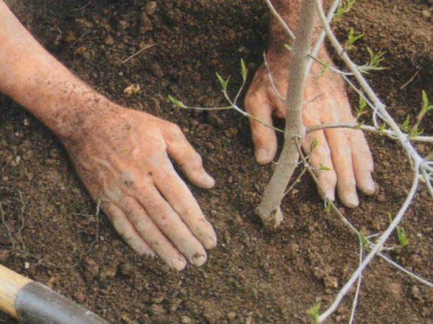 Что можно посадить после капусты на следующий год: изучаем севооборот
