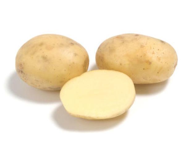 Картопля коломба-наш сорт з голландії