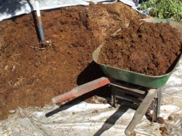 Які добрива вносити при посадці картоплі в лунки