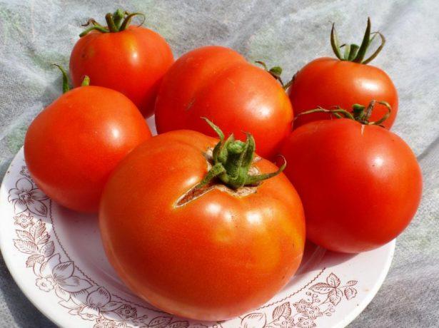 Секрети вирощування великого врожаю томатів боні