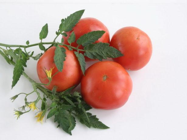 Карликовий томат сорту гном-улюбленець багатьох дачників
