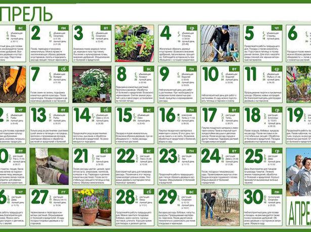 Місячний календар при посадці томатів