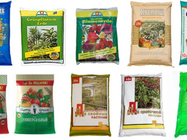 Сортові особливості томата батяня і агротехніка вирощування