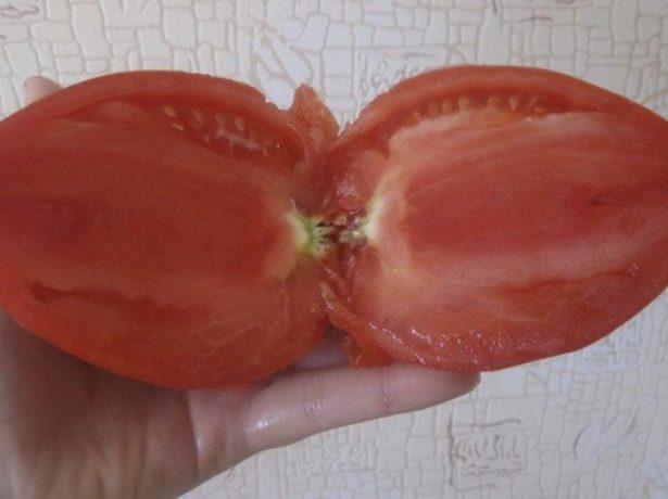 Кенігсберг-томат з високими стандартами