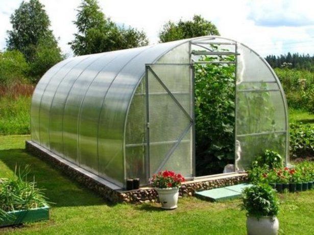 Лідер продажів-томат благовіст f1: опис і особливості вирощування