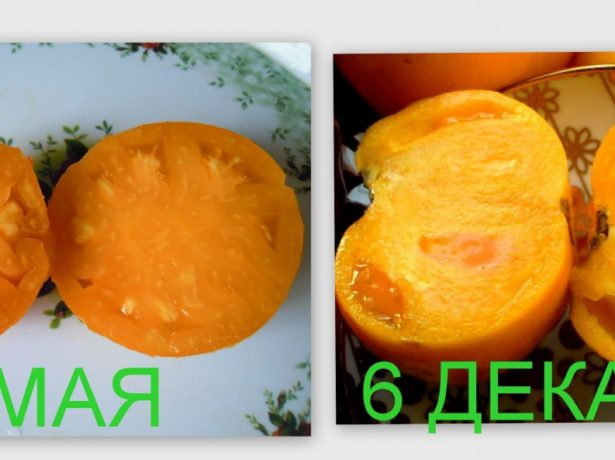 Смачні і на вигляд просто чудові. Салатний сорт. Фріда Https://semena.biz.ua/pomidor/28819/reviews / Якщо брати одну упаковку, то це невигідно, насіння там до десяти штук. Купила оптом і не пошкодувала, адже розсади вийшло якраз для немаленького городу. Лолла л. Https://semena.biz.ua/pomidor/28819/reviews / Купила я цей ранньостиглий гібрид з дружним дозріванням плодів для своєї теплиці. Вони дуже швидко сходять, все насіння з упаковки зійшли, полив для них потрібен хороший, так як вони дуже швидко ростуть. Догляд за ними потрібен відповідний всім томатам — полив. 79039150651galin Https://otzovik.com/reviews/semena_tomata_aelita_krasnie_schechki Сорт хороший. Для вирощування томатів на своїй дачі вирішила купити новий сорт»рожеві щічки. Не шкодую про вибір. Помідори смачні, урожай непоганий, та й транспортуються до міста без вмятин. Анфіса Https://semena.biz.ua/pomidor/28819/reviews / Я садила рожеві щічки у відкритий грунт. Діти практично не формую, кущ був близько 60 см, розлогий. Рано закладається перша кисть, на відміну від індентів, великий салатний помідорчик можна отримати раніше. Сіяла на розсаду 19 березня, в грунт висадила 14 травня. Спеціально обліку за термінами і врожайності не вела, але сорт дуже сподобався — смачні помідори. Рожеві, мясисті, для салату-відмінні, якби формувала, напевно набрали б заявлену вагу. Nn31 Http://dacha.wcb.ru/index.php?showtopic=54284
