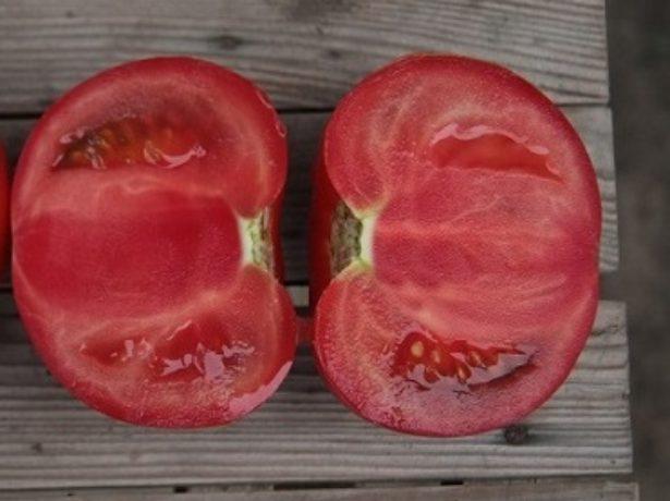 Томат кібо-урожайний рожевий гібрид
