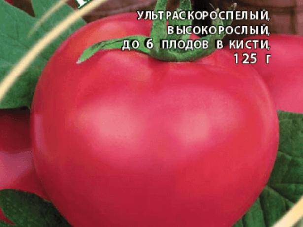 Сорт алтайський шедевр-великий і холодостійкий томат