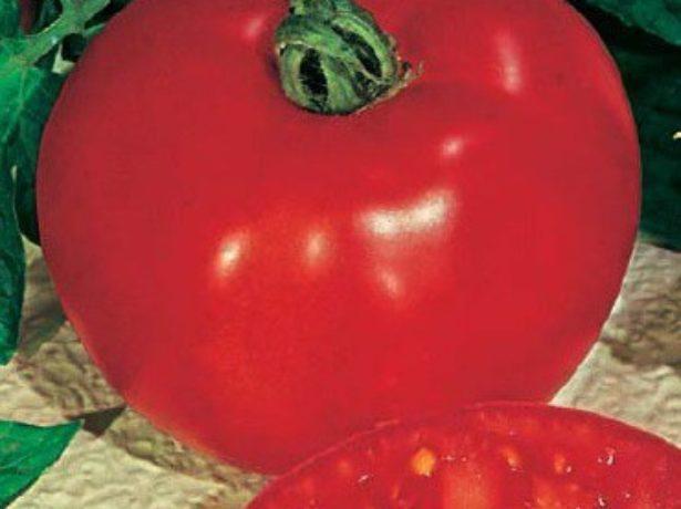 Хлиновский-томат з двома головними перевагами: відмінним смаком і хорошою врожайністю