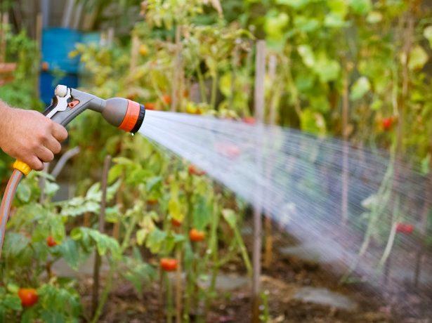 Чим удобрювати полуницю восени для кращого врожаю