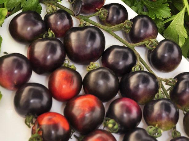 Ця гроно дійсно чорна: найбагатший антоціанами сорт томатів