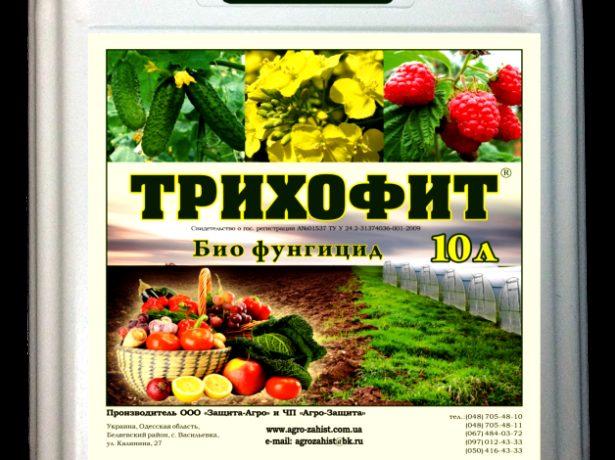 Як обробити землю після фітофтори на томатах