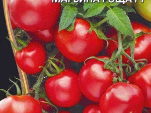 Томат марїна роща-гідрид-новинка з неймовірною врожайністю
