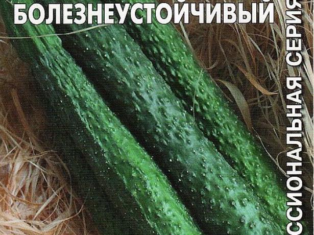 площа листя зменшується, скорочується кількість квіток, коротшають міжвузля, може розтріскуватися підстава стебла. при знижених температурах спостерігається ефект бородавчастості. плоди набувають строкату, крапчасту забарвлення, можуть викривлятися, темно-зелені ділянки стають опуклими.
