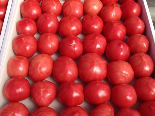 Рожеві райські томати-японський сорт пінк парадайз