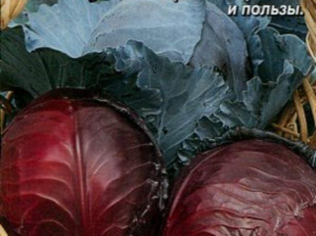 Сорт томатів ніагара-водоспад з помідорів