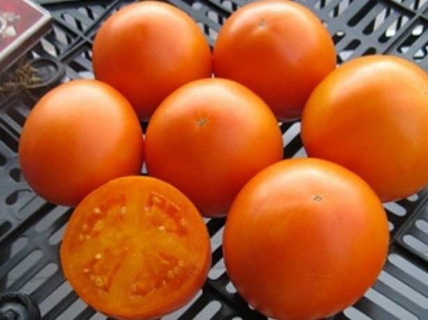 Добірка кращих сортів томатів на 2019 рік