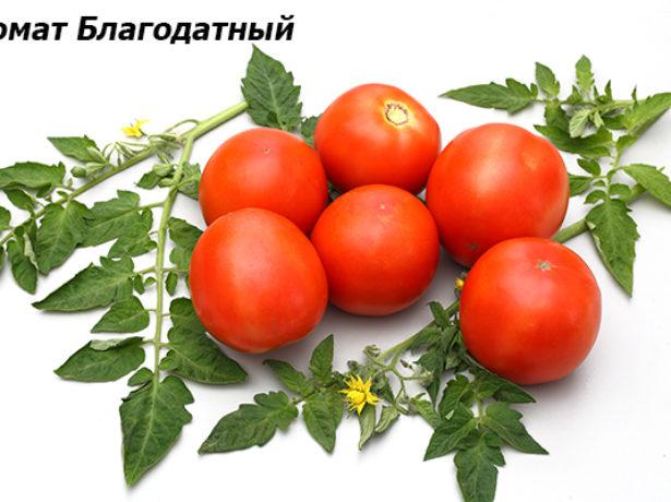 Грамотне знезараження розсадного грунту-запорука здорової розсади