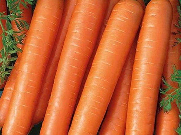 Морква тушон-відмінний універсальний сорт для середньої смуги
