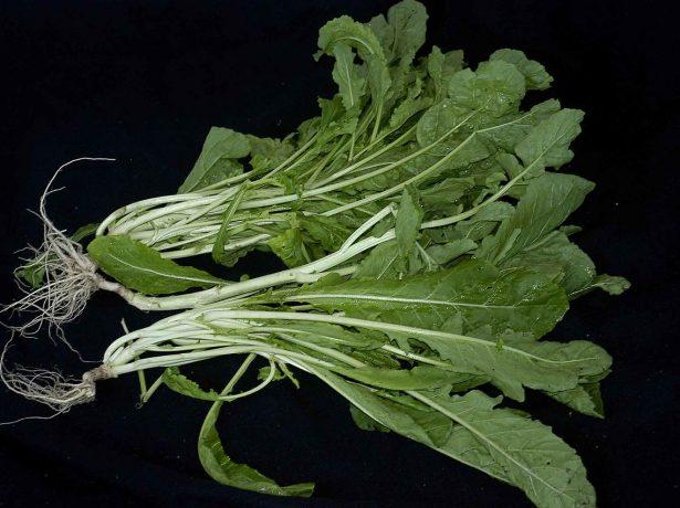 Купчиха — первый официально зарегистрированный сорт земклуники