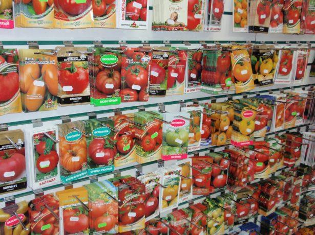 Що таке індетермінантні томати і як їх вирощувати