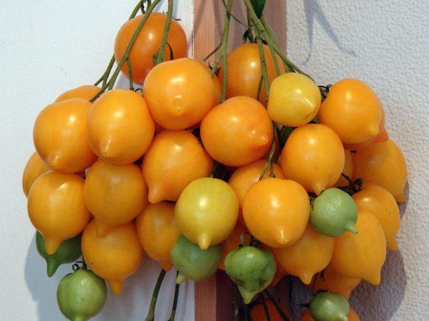Самі незвичайні помідори: добірка з фото екзотичних сортів томатів різної форми і забарвлення