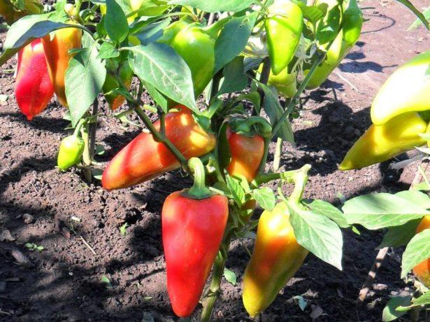 Що може рости на грядці після полуниці