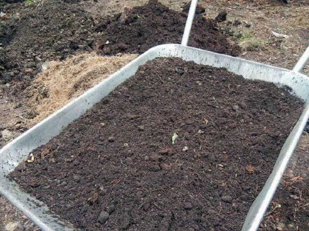 Посадка насіння на стрічці: простота і надійність методу